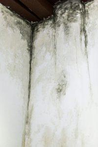 Yornel Martinez